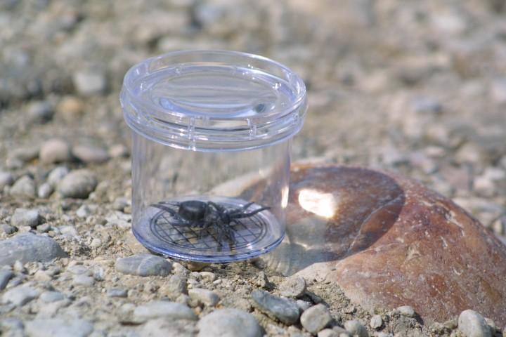 Coghlans Kinder Käfer Dose